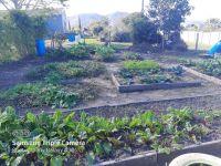 George Community Garden Project